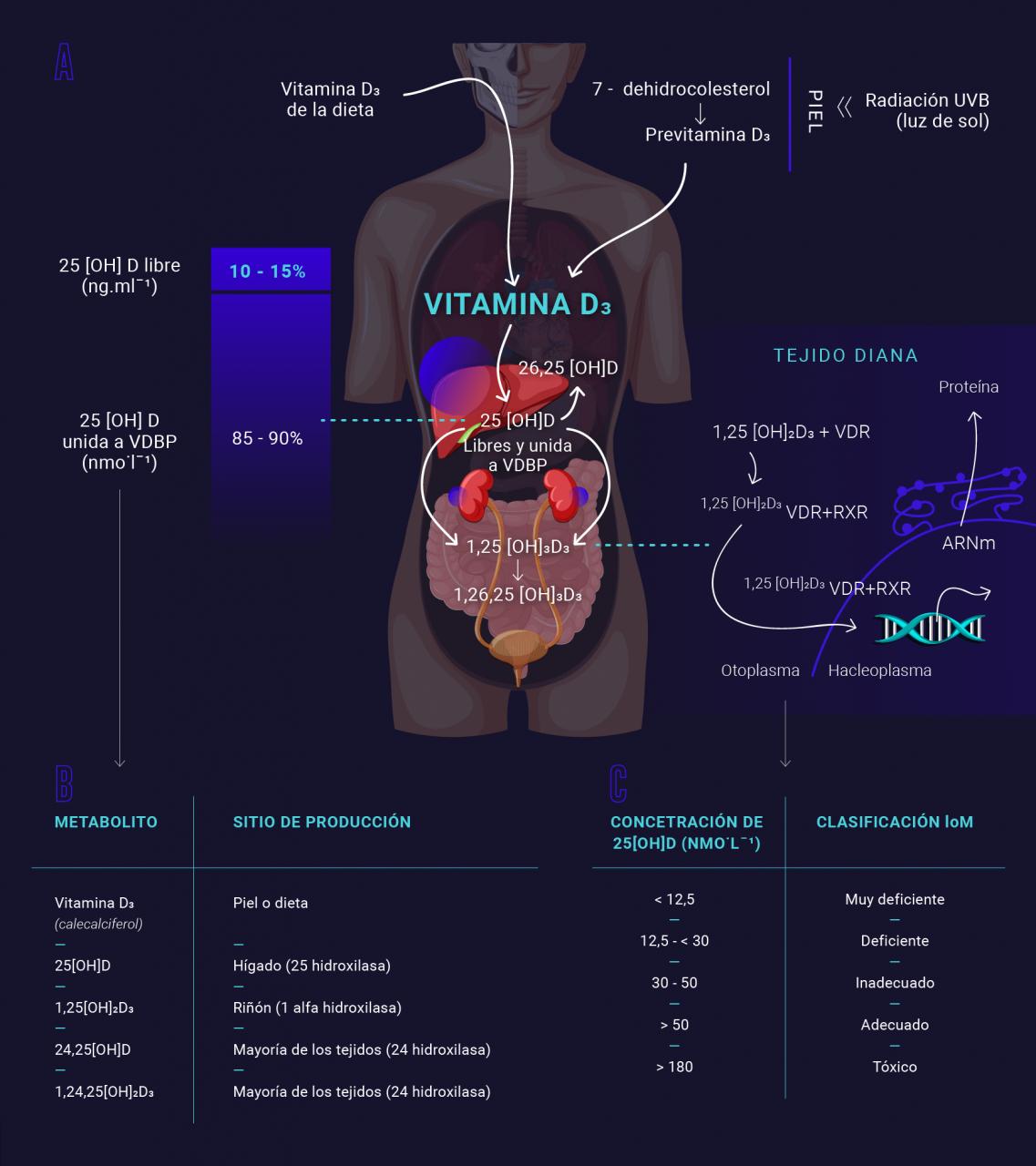 Nutricion-deportiva-vitamina-D-suplementacion-suplementos-IND-cuerpo