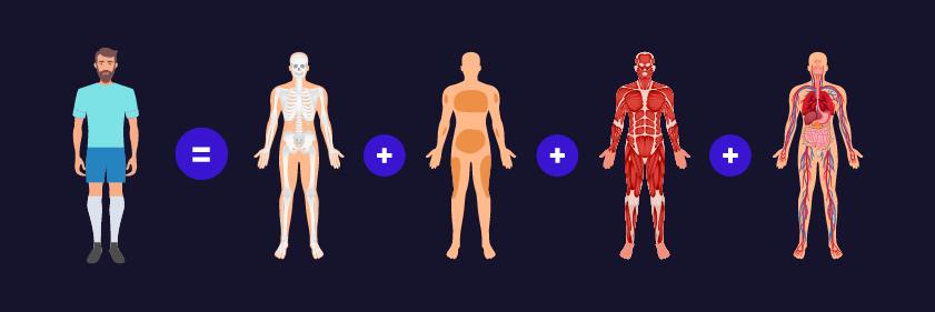 Cómo calcular la grasa corporal-Nutrición deportiva-Composición corporal-IND-Nutricionista online